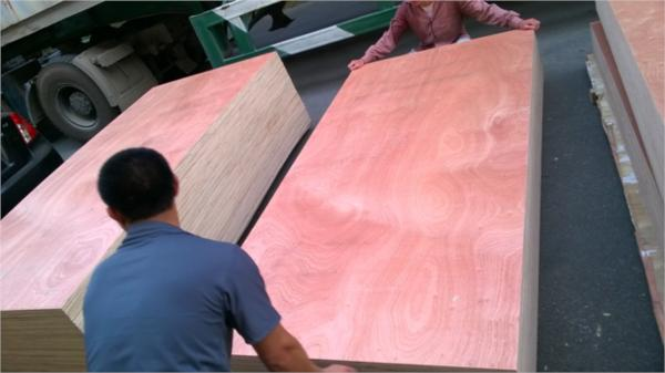 Sapele Faced Plywood